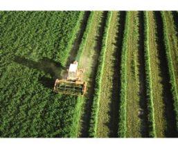 24186_0_agricultura.jpg